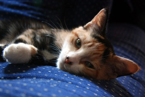 "A new ""family member,"" a calico kitten named Maggie May."